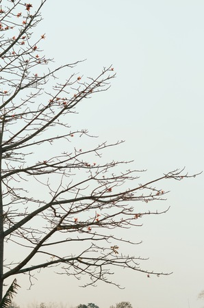 stylize: stylize abstract branches on a background of the sky