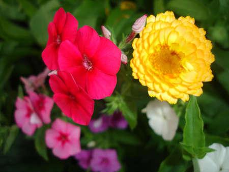mix summer flower