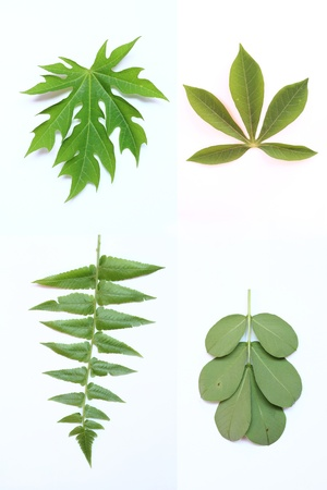 leaves  Stock Photo - 15059687