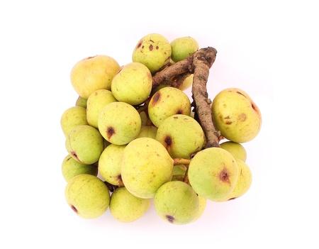 Moraceae Stock Photo