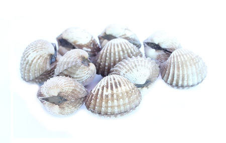 Cockle Stock Photo