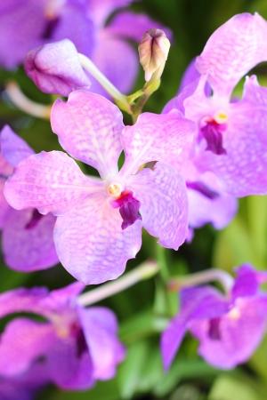 orchidaceae: orchidaceae Stock Photo