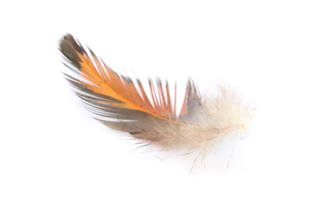 Single feather isolated on white background Stock Photo - 20984923