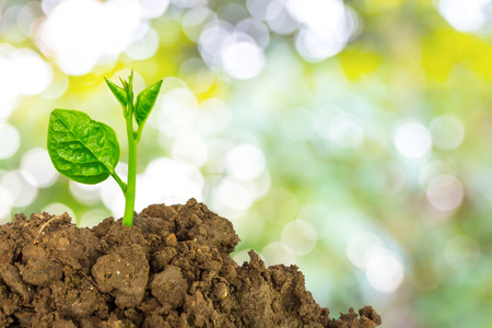 Young green plant of soil Stock Photo