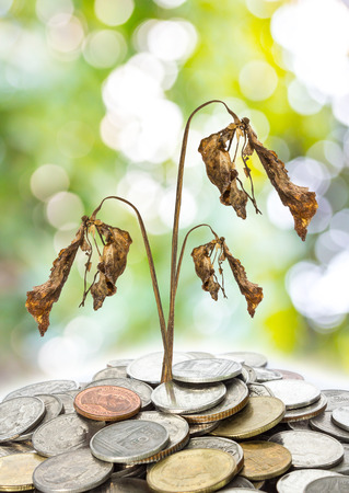 tree dried on coin