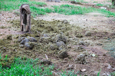 Elephant dung