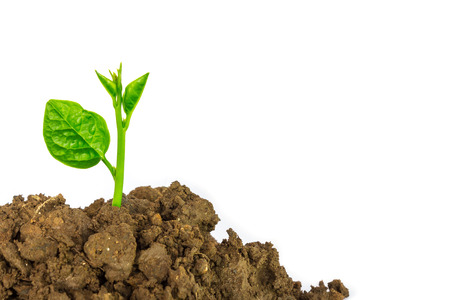 plant growing: Young green plant isolated on a white background Stock Photo