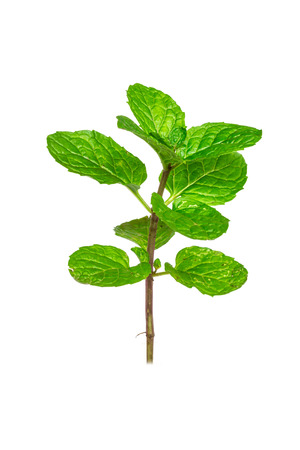 peppermint on white background Stock Photo