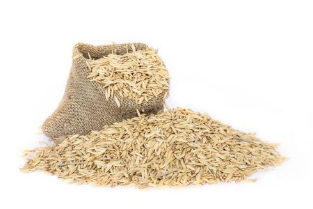 paddy field: paddy jasmine rice on white background