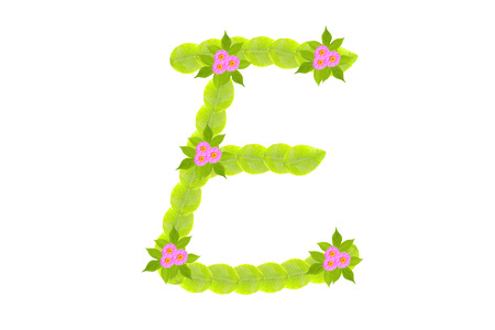 Photograph of Leaves Letter E photo