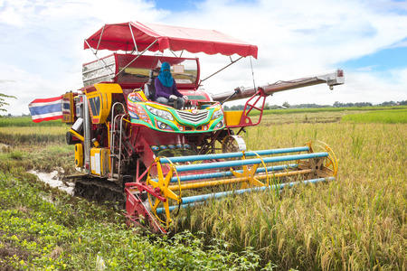Thai farmers are using. Harvest is harvested at rice field in Angthong,Thailand
