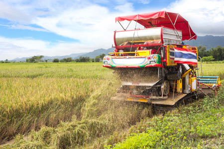 Thai farmers are using. Harvest is harvested at rice field in Angthong,Thailand  photo