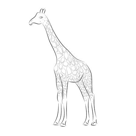 giraffa: Jirafa Ilustraciones Line Art Vectores