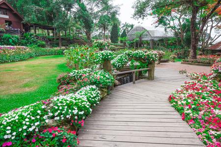garden flower: Garden flowers , mae fah luang garden