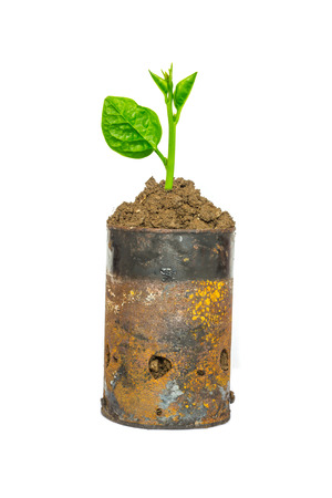 Green plant in rusty cans
