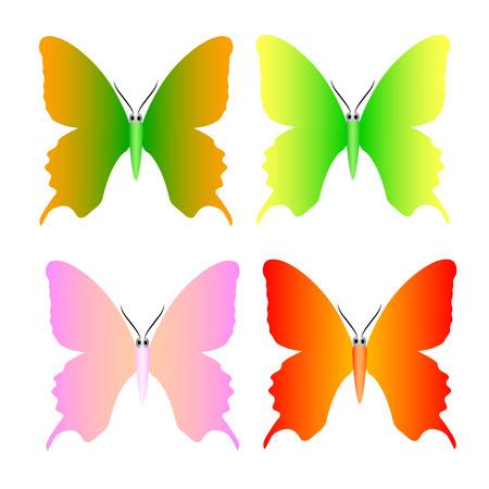 butterfly vector: butterfly vector