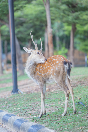 whitetail: Whitetail deer fawn still in spots on a grassy field