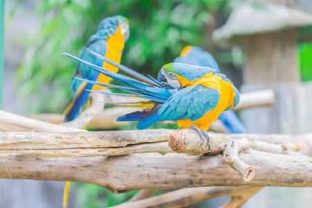 parrot bird sitting on the perch