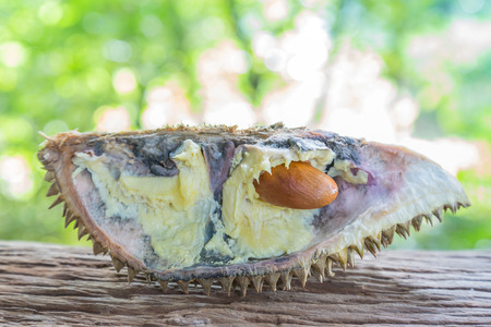 Durian and durian fruit is rotten. Stock Photo