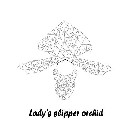 Orchids, Flower Line Sketch, Vector Illustration. Illustration