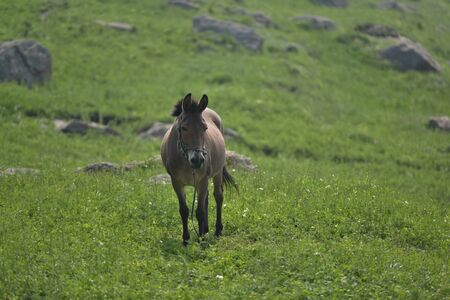 Horse on the prairie 版權商用圖片 - 142998171