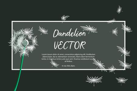 Dandelion flower card with dark background and white flower. Dandelion illustration for cards or background vector concept.