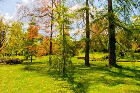 arbre: Fontainebleau - Spring Stock Photo