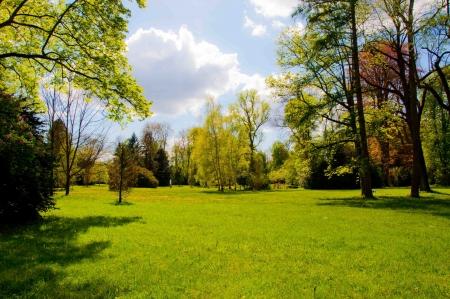 arbre: grass