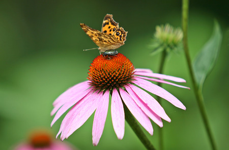 Tiger with butterfly and flower