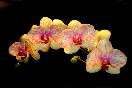 Beautiful orchid in black background Imagens