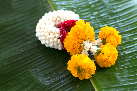 Jasmine garland of flowers on banana leaf background.