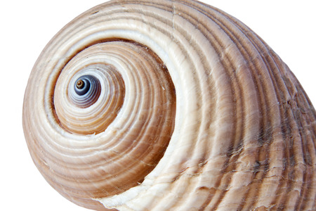 sea shell isolated on white background  photo