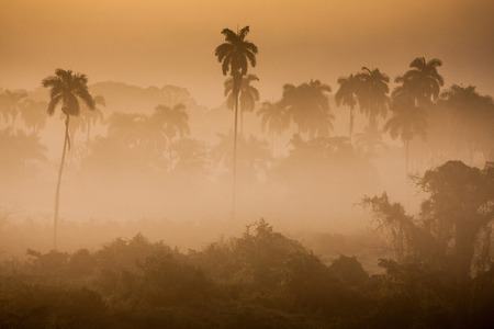 Wonderful sunrise above tropical palm jungle with sun rays and thick morning fog  photo