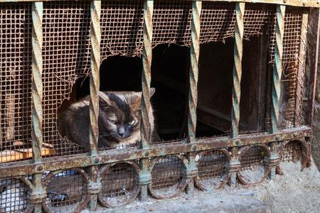 古いウィンドウ グリル、ヴェネツィア、イタリア、ヨーロッパの猫