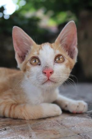 whiskar: Cute kitten looking up  Stock Photo