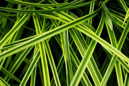 green leaf Stock Photo - 771602