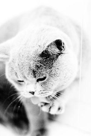 Cat&Water Stock Photo