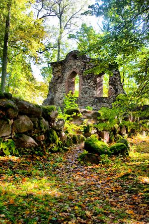 old castle ruins placed at forest