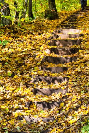 Staircase at autumn forest photo