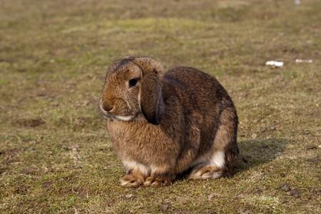 Small brown rabbit on green grass
