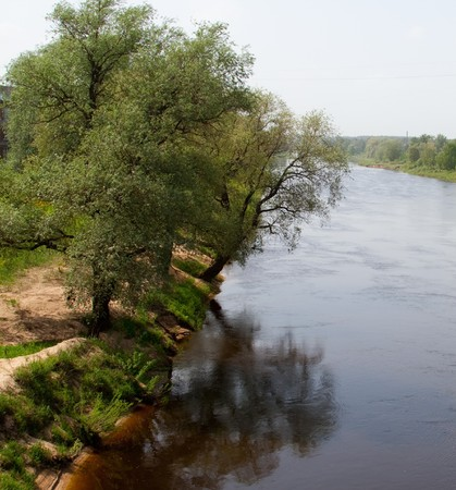 Trees on river bank photo