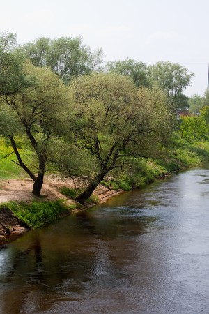 Trees on river bank