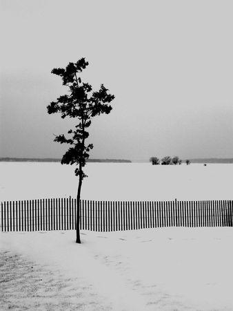 Cold tree Banco de Imagens