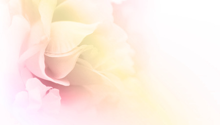 Pastel color fabric roses in soft style for background