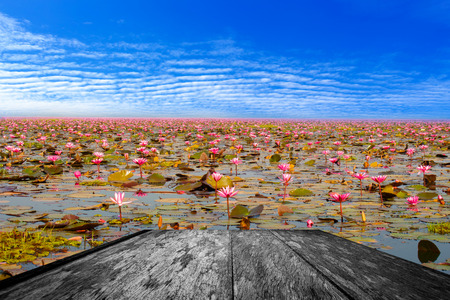 nymphaeaceae: Wooden table with Sea of red lotus, Nong Han, Udon Thani, Thailand unseen in Thailand