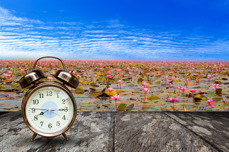 nymphaeaceae: Retro alarm clock on wood and Sea of red lotus  background, Udon Thani, Thailand unseen in Thailand