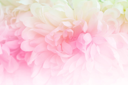 colorize: Beautiful flowers made with color filters in soft color and blur style for background
