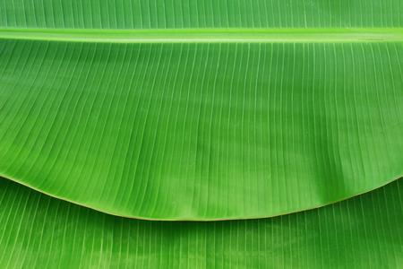 Close-up van bananenblad textuur abstracte achtergrond Stockfoto