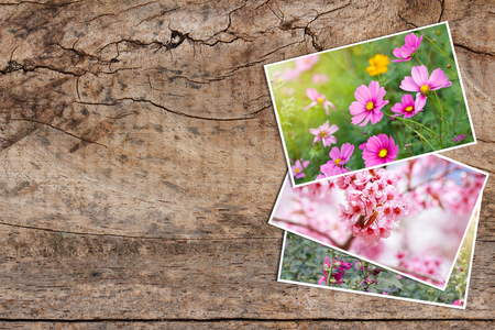 Beautiful flowers photos on old wooden table