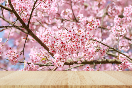 Empty top wooden table with Wild Himalayan Cherry (Prunus cerasoides), Sakura in Thailand for montage of your product